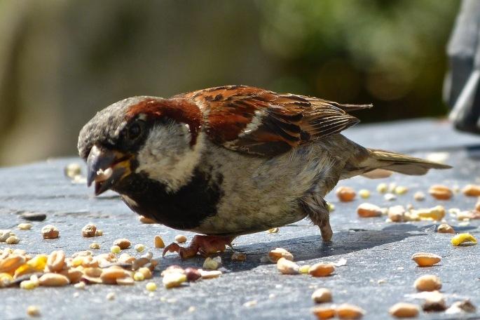 1sparrow